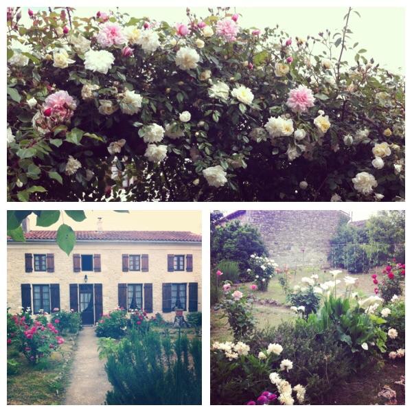 le jardin (magique) de ma grand-mère